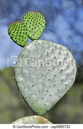 Cactus opuntia - csp0865733