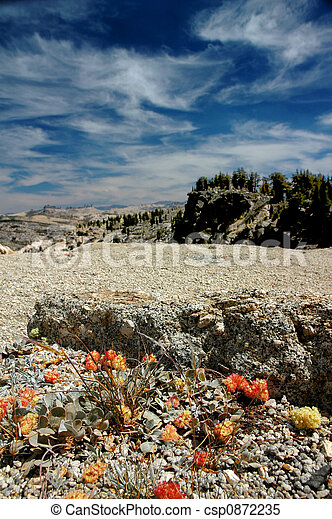 Orange Mountain Wildflowers - csp0872235