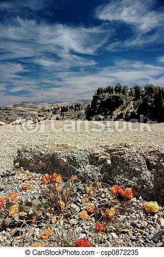 Orange Mountain Wildflowers - csp0872235