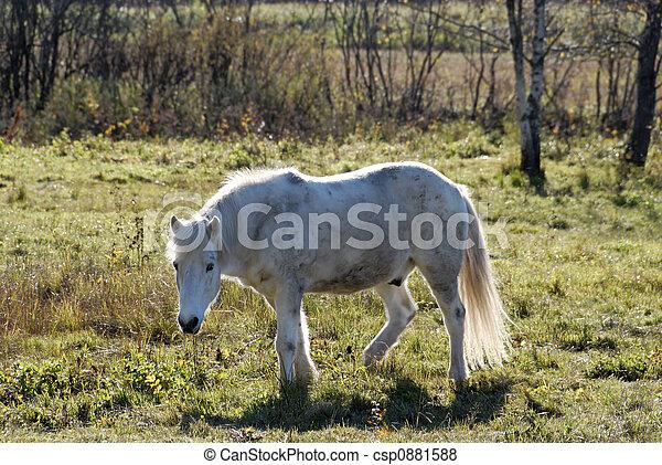 White Horse - csp0881588