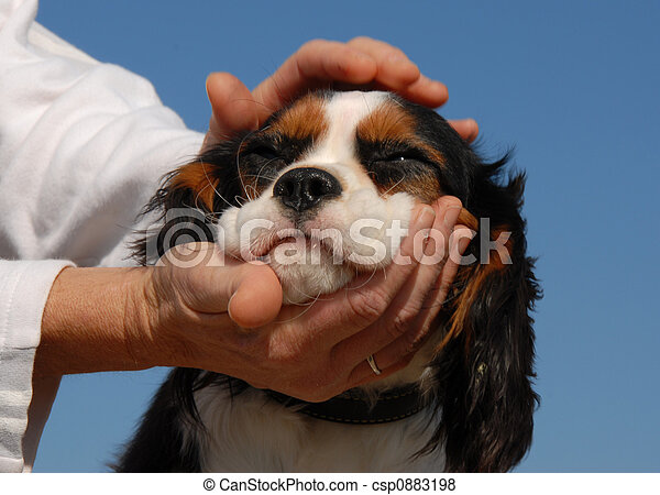little dog and woman hand\'s