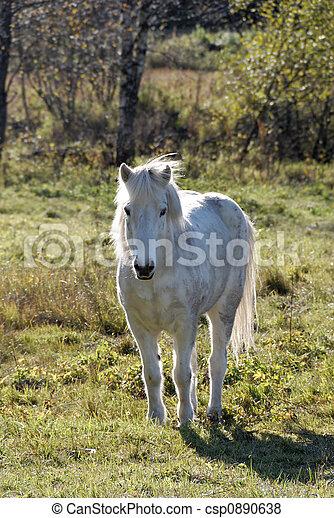White Horse - csp0890638