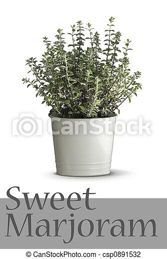 stock foto von thymian pflanze in blumenvase freigestellt auf csp0891532 suchen sie. Black Bedroom Furniture Sets. Home Design Ideas