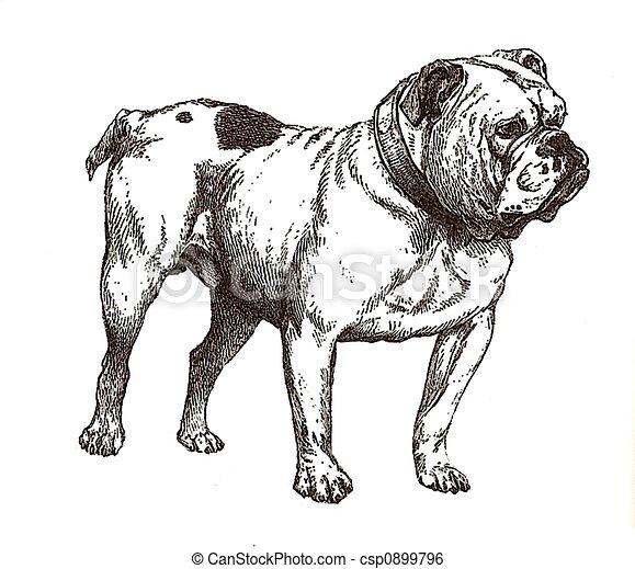u30d6 u30eb u30c9 u30c3 u30b0  u30a4 u30e9 u30b9 u30c8 sad english bulldog puppy clipart english bulldog clipart free