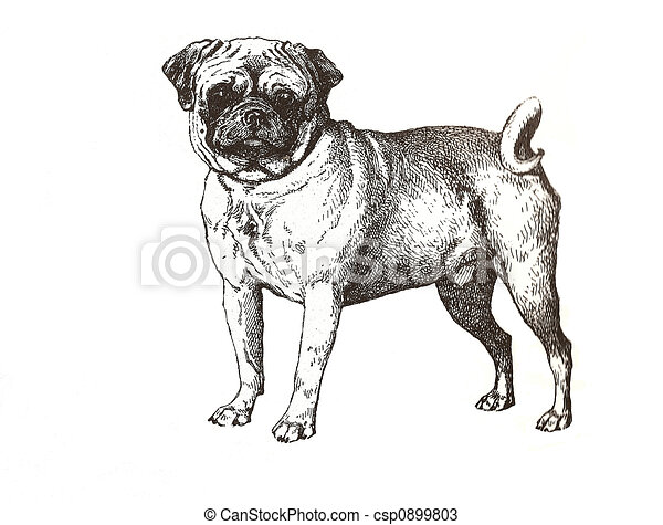 illustration of pug - csp0899803