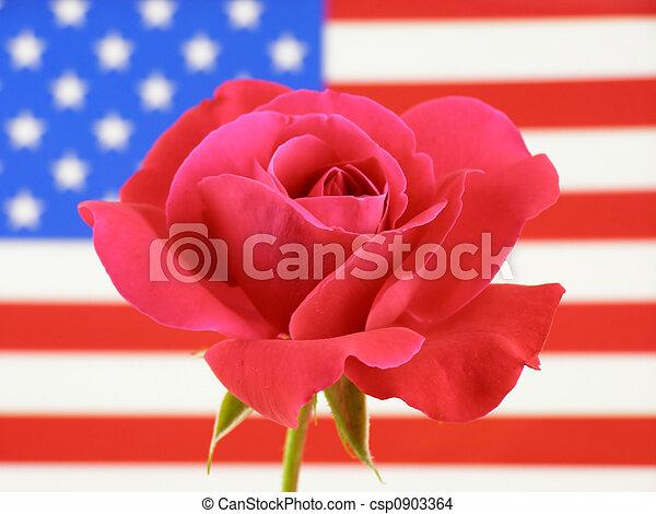 rosa, bandera - csp0903364