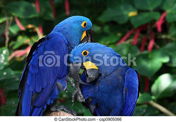 Macaw - csp0905066