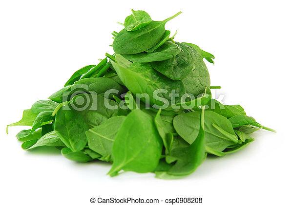 Spinach - csp0908208