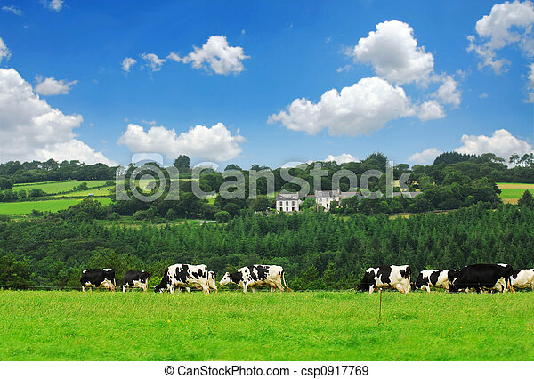 Cows in a pasture - csp0917769