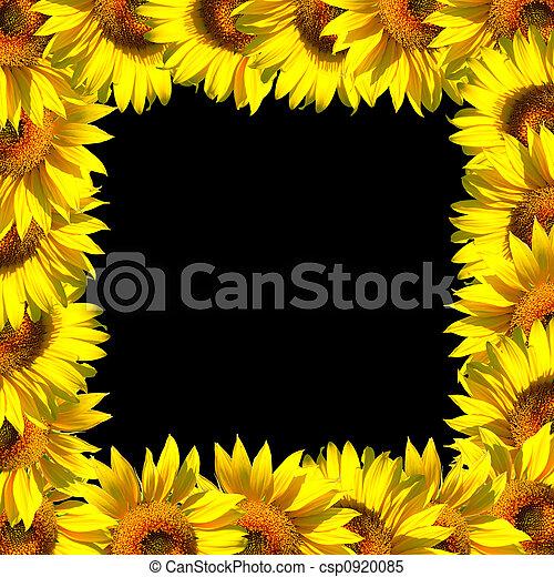 Sunflowers frame on black
