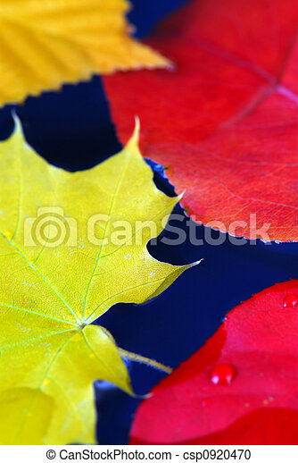 Fall leaves in water - csp0920470