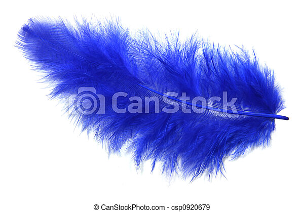 Blue feather - csp0920679