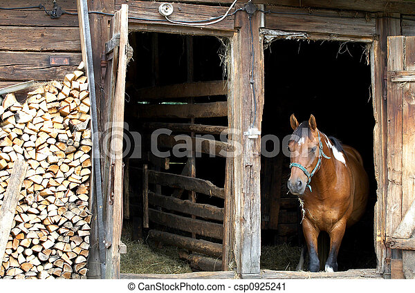 horse in  stable - csp0925241