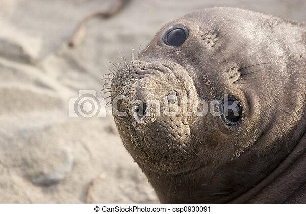 baby seal - csp0930091