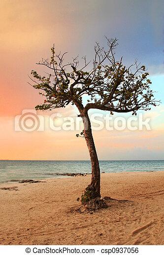 Quiet Tropical Tree in Paradise - csp0937056