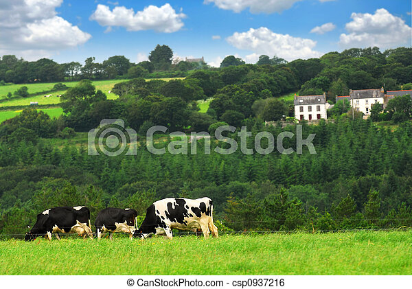 Cows in a pasture - csp0937216