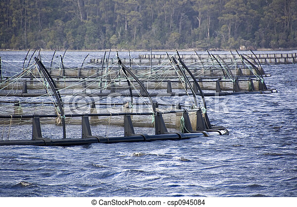 Salmon Farming - csp0945084