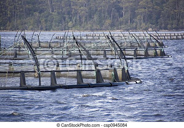 Salmon Farming - csp0945084