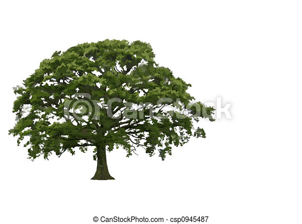 Abstract Summer Oak Tree - csp0945487