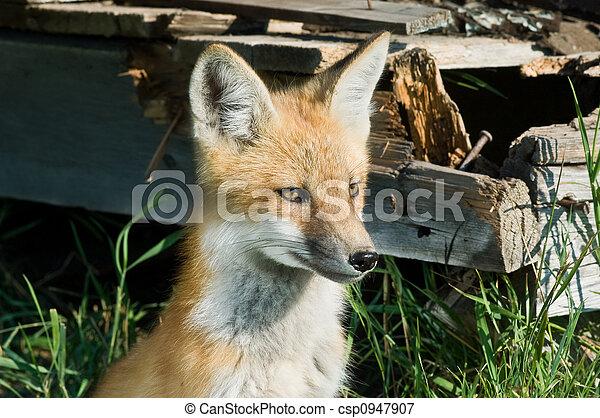 Fox - csp0947907