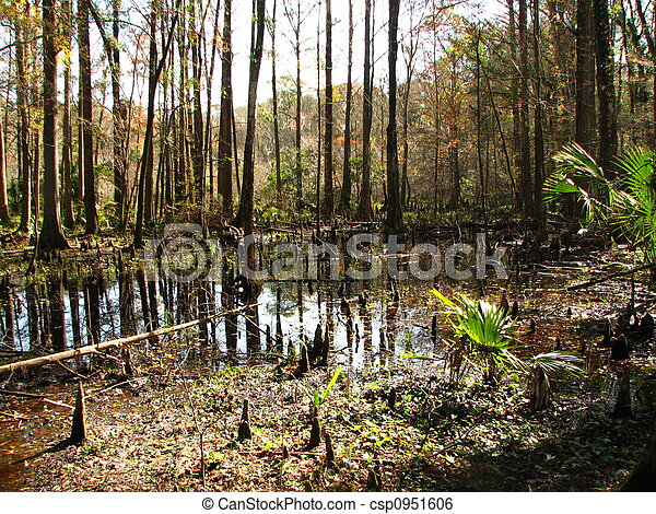 cypress knees reflection