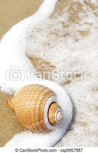 Concha marina - csp0957887