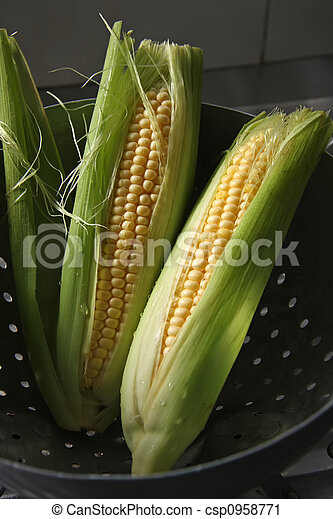 Fresh ears of corn - csp0958771