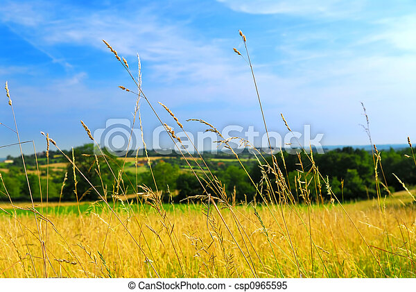 Country meadow landscape - csp0965595
