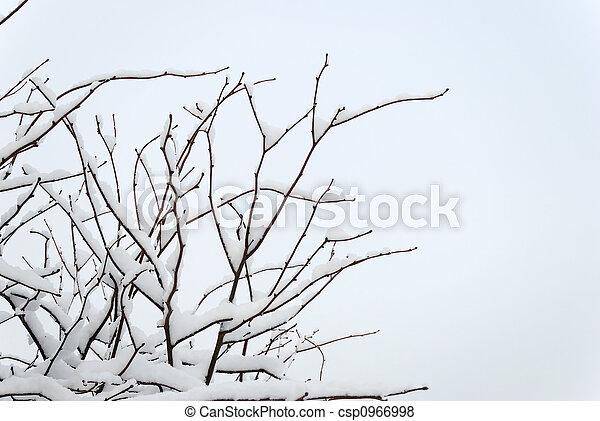 Cherry Treetop under Snow - csp0966998