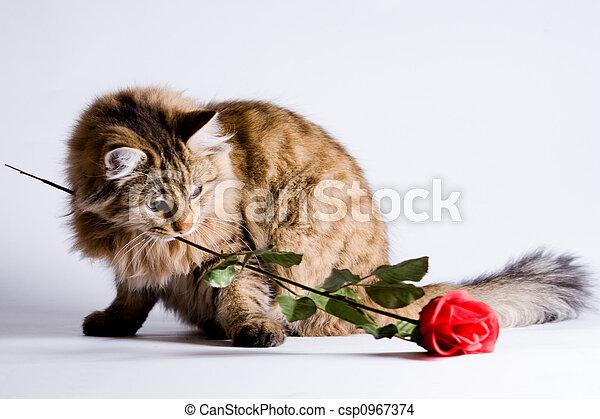 Chat pour jeune