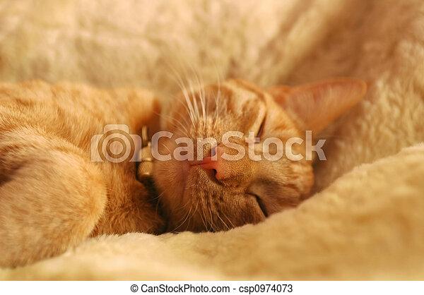 cozy kitten - csp0974073