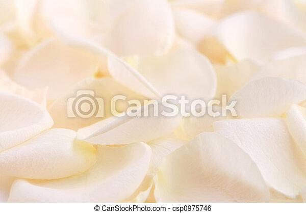 Rose petals - csp0975746