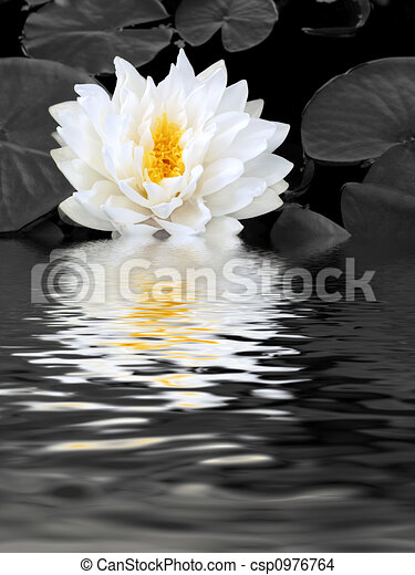 White Lily Beauty - csp0976764