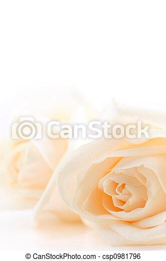 Beige roses background - csp0981796