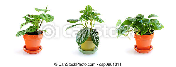 Assorted houseplants - csp0981811