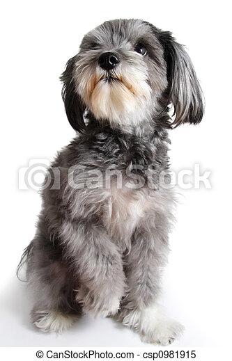 nice bastard dog - csp0981915