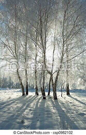 Inverno, floresta - csp0982102