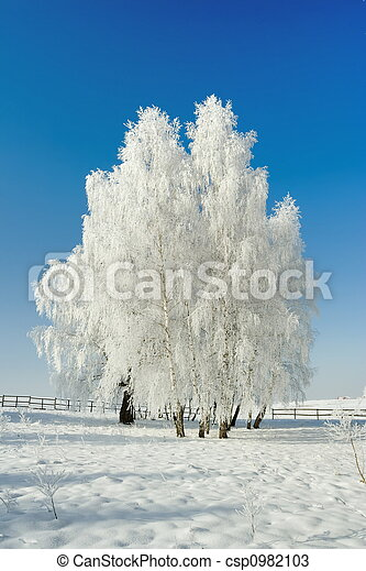 Winter landscape and trees - csp0982103