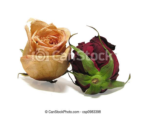 dead roses 02 - csp0983398