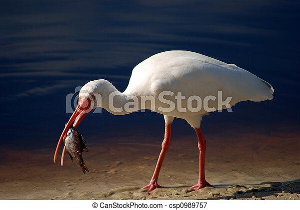 Bird 4 - csp0989757