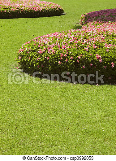 cut grass lawn with bushes - csp0992053