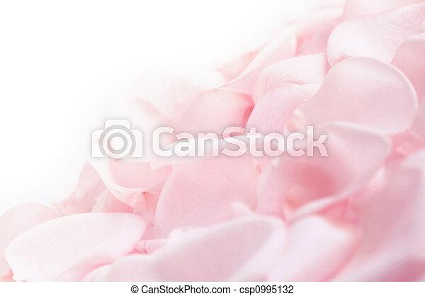Pink rose petals - csp0995132