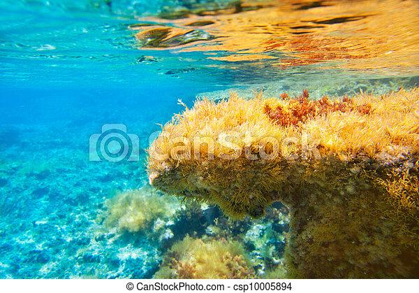 Ibiza Formentera underwater anemone seascape - csp10005894