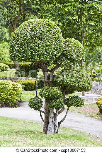 Images de beau jardin arbre nain beau nain arbre for Beaux arbres de jardin