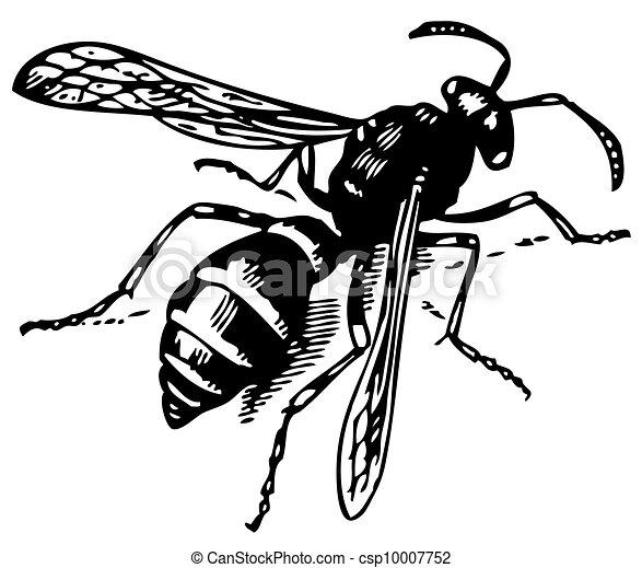 Wasp Odynerus - csp10007752