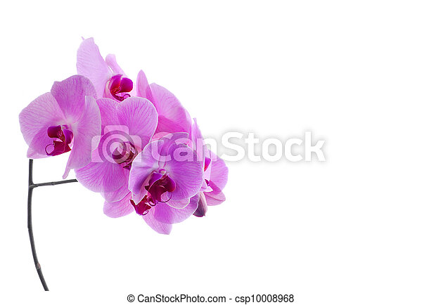 orchid isolated on white - csp10008968