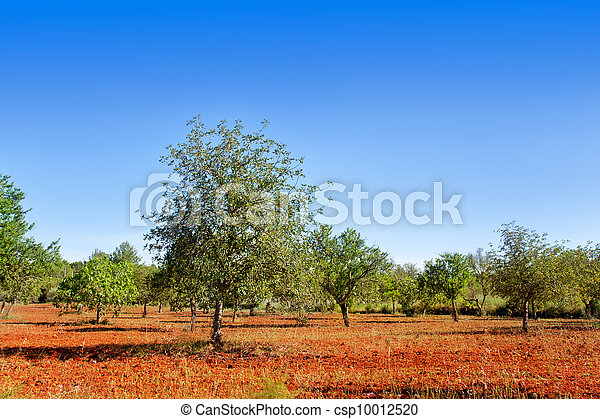 Agriculture in Ibiza island mixed mediterranean trees - csp10012520