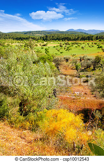 Ibiza island landscape with agriculture fields - csp10012543