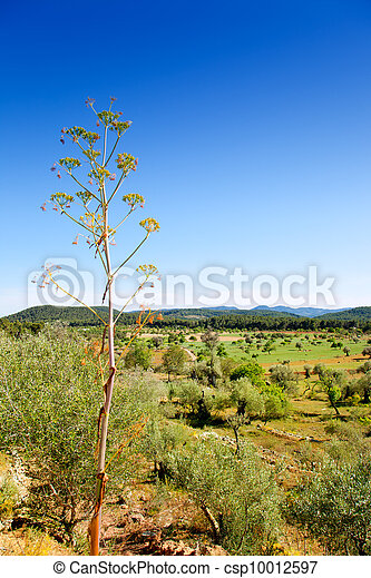 Ibiza island landscape with agriculture fields - csp10012597