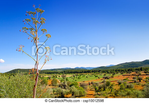 Ibiza island landscape with agriculture fields - csp10012598